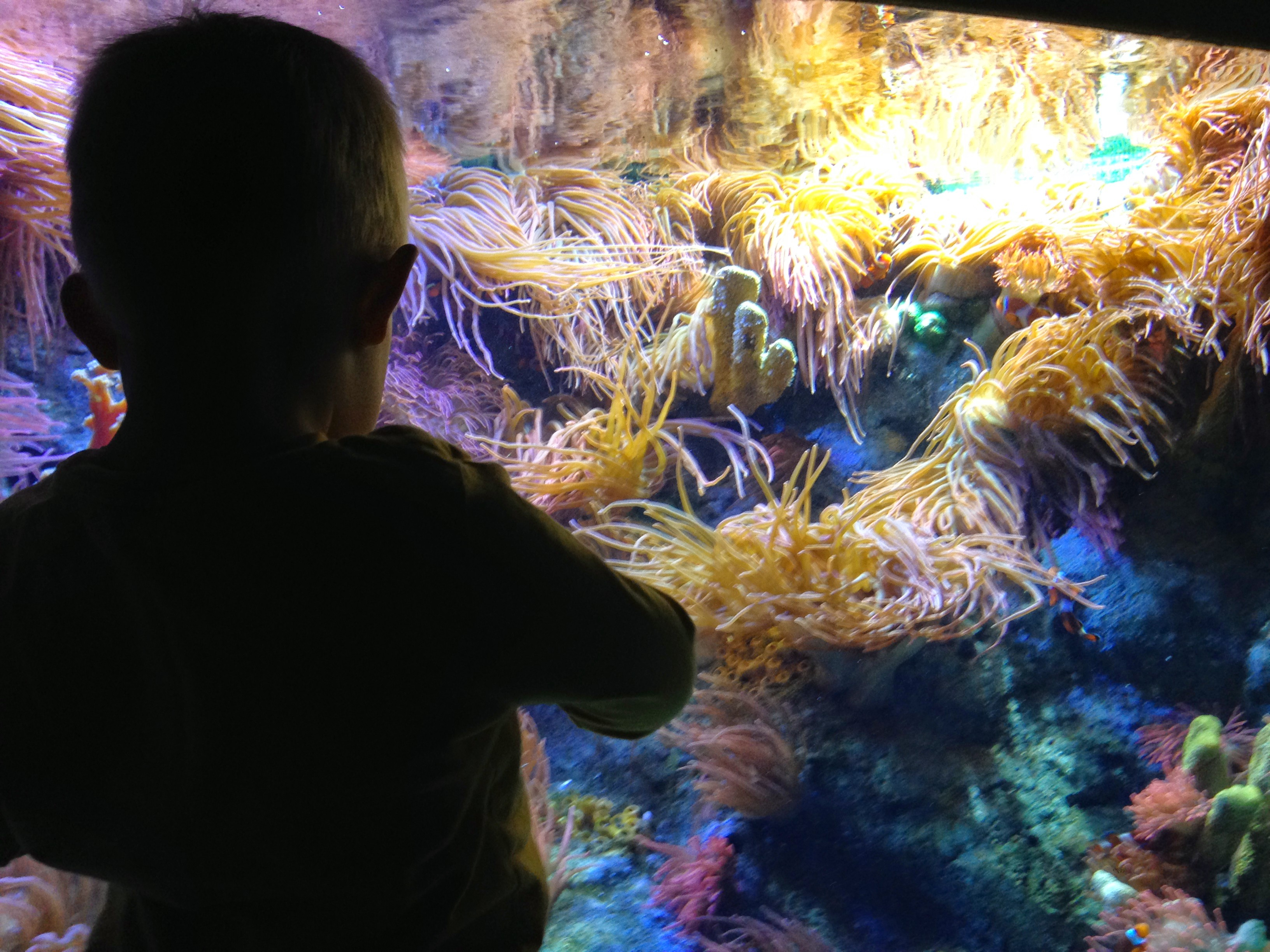 Day out with a toddler at national marine aquarium in Plymouth