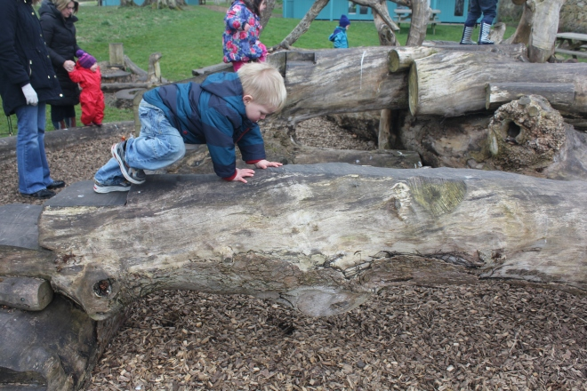 toddler climbing on tree at Seaton Delaval Hall
