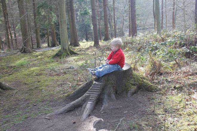 Fairy housein a tree trunk at Wallington
