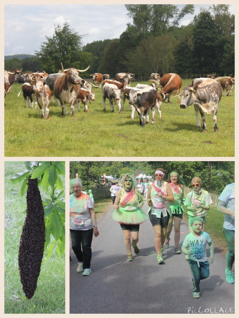 Bees runners cows run or dye Babyfoote