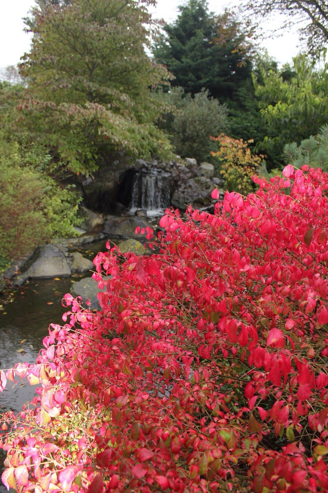 botanic garden den helder japanese