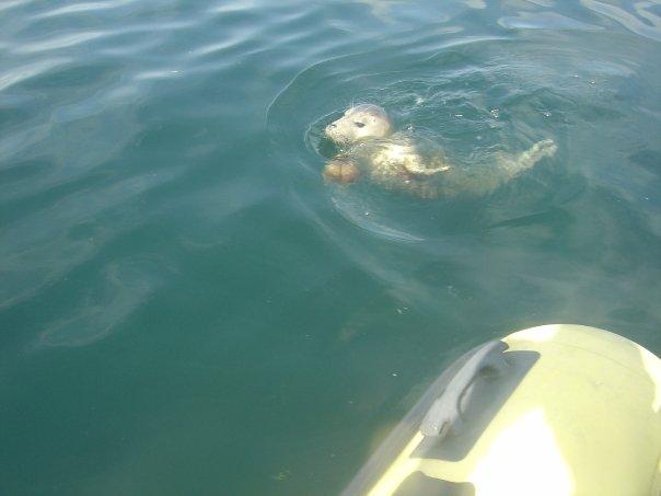 seal boat farne islands northumberland