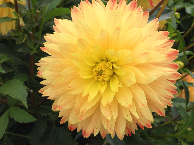 karlsruhe botanical gardens yellow flower bloom