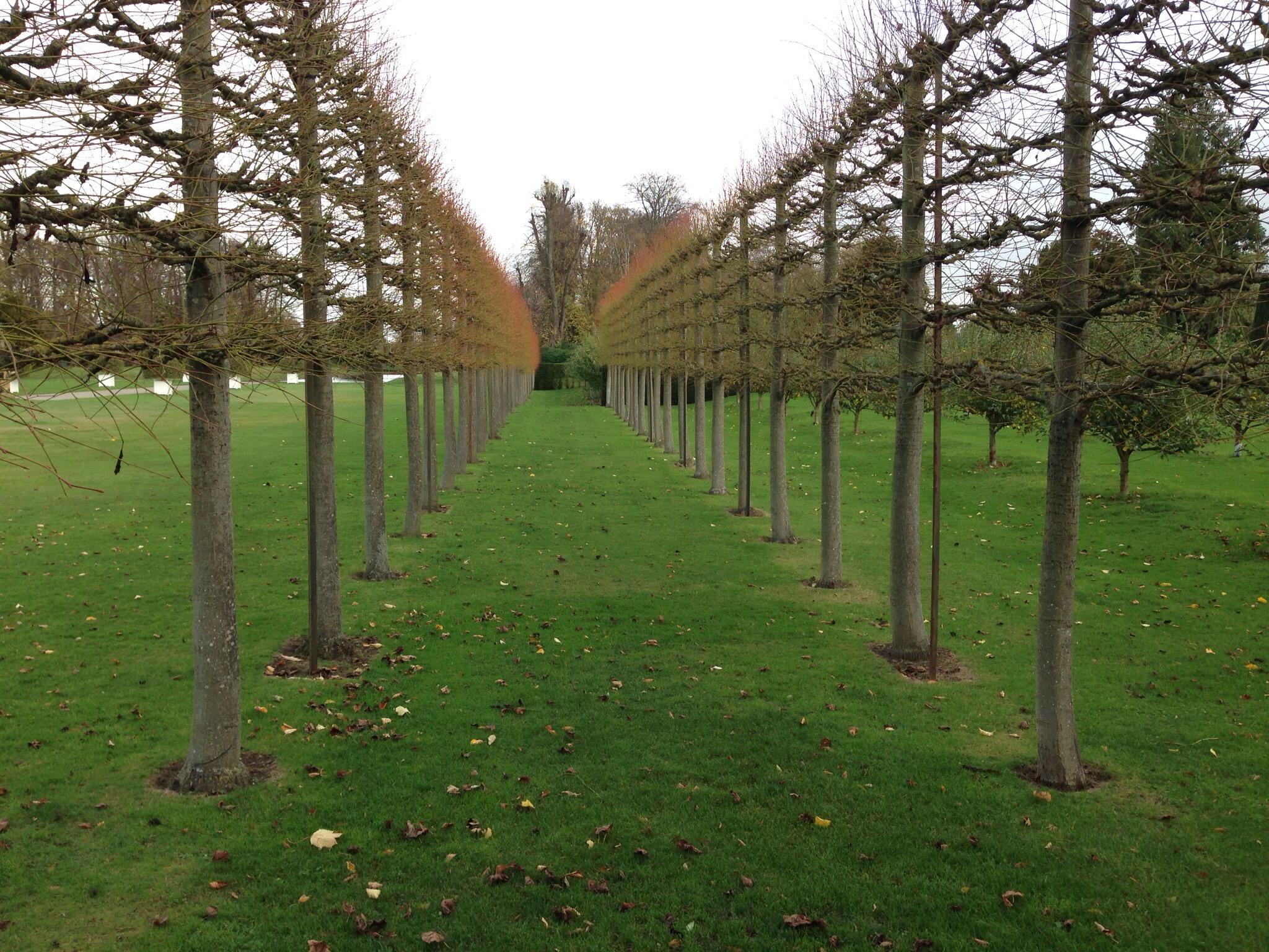 row of trees at erddig