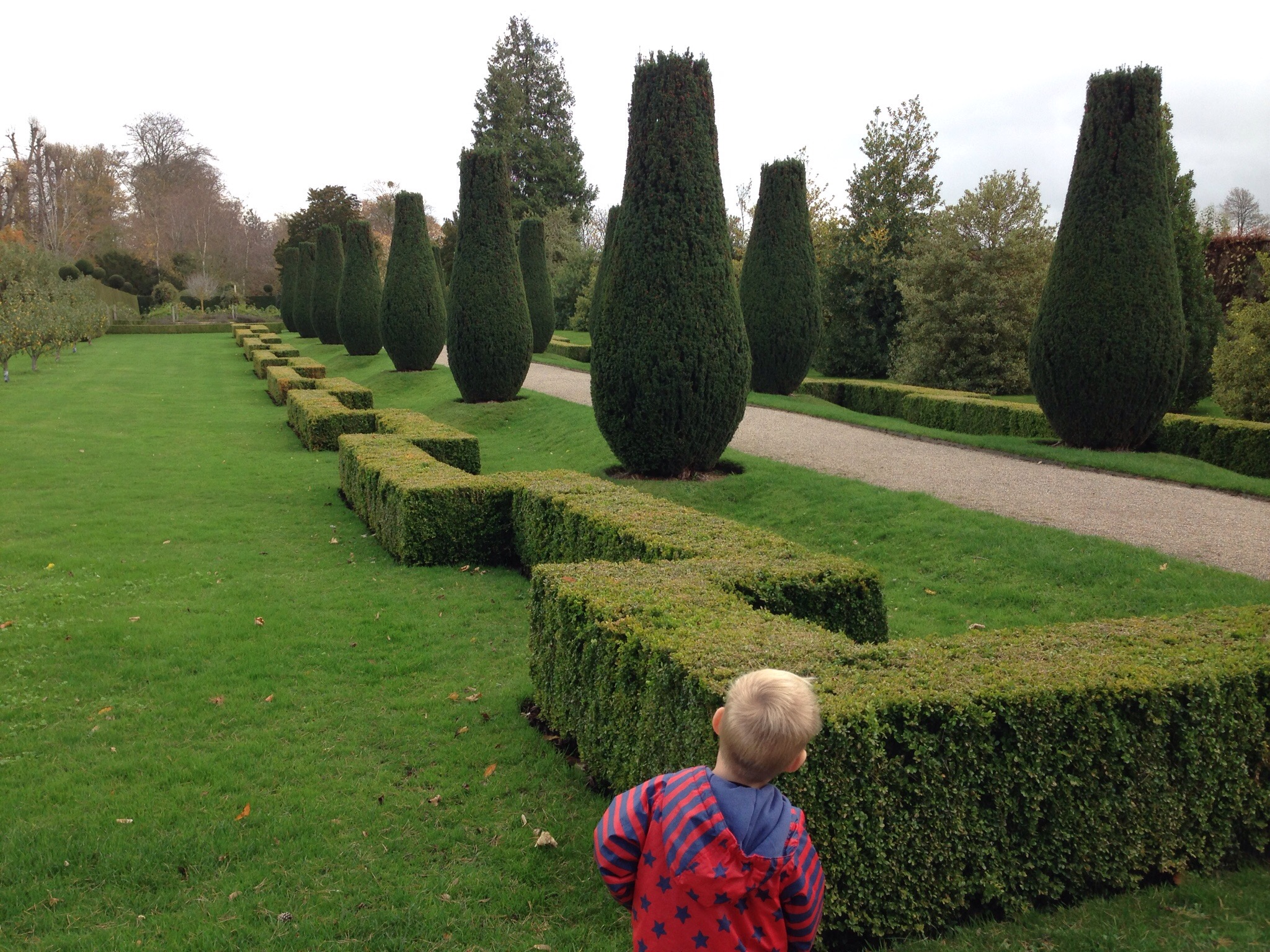 getting ready to run along the zigzag hedges at erddig