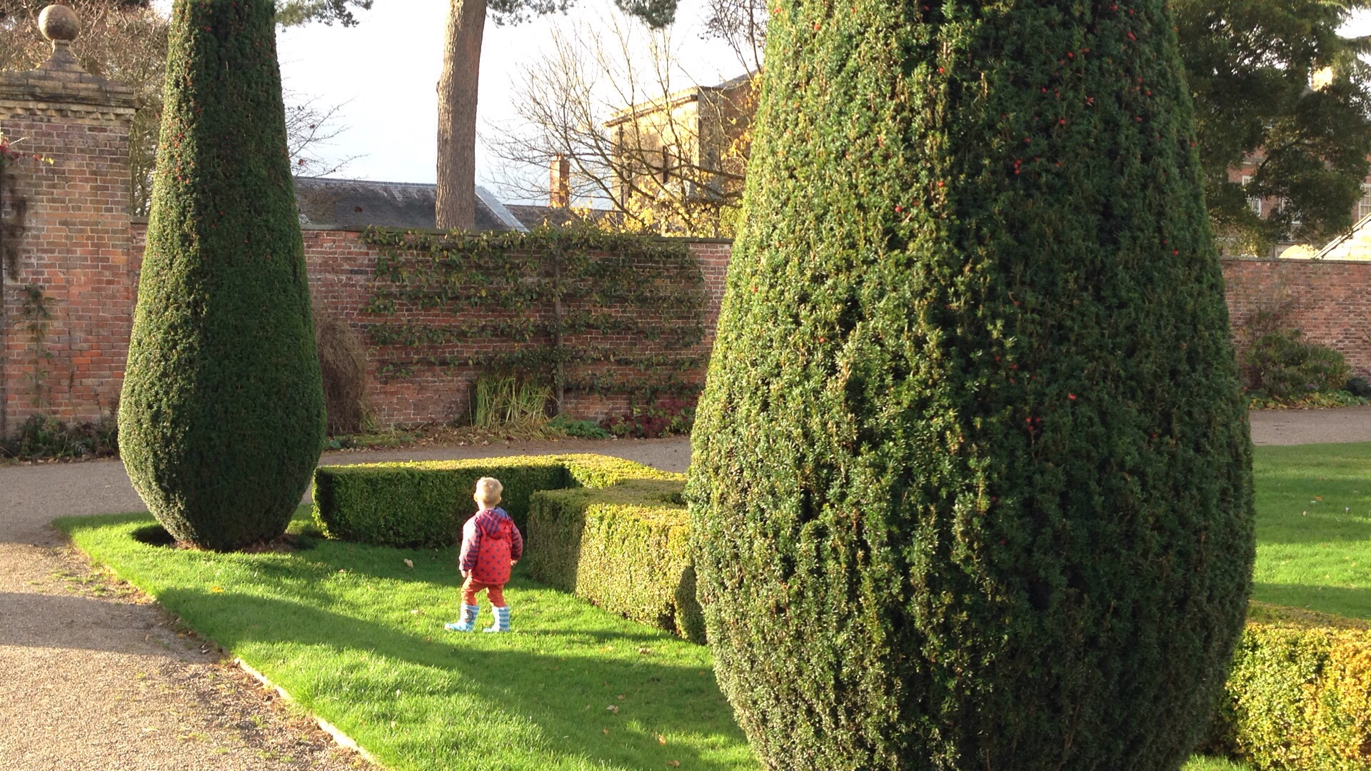 trees and zig zag hedges at erddig