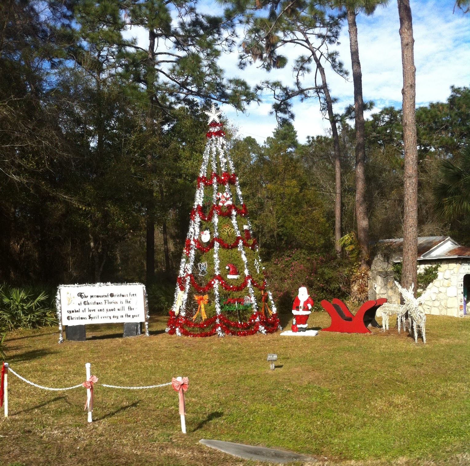 christmas tree permanent in florida